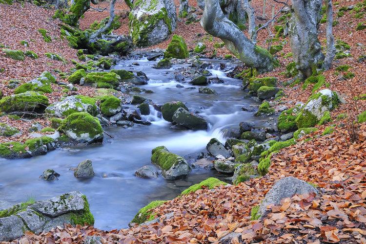 8 forêts pour profiter de l'automne en Espagne